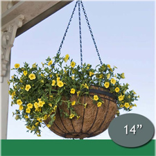 Hanging Planter With Chain Hanger