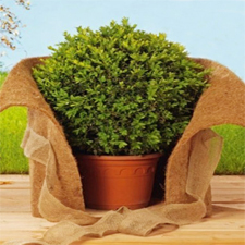 Biodegradable Plant Protection Mat